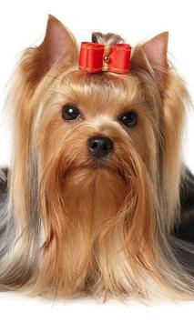Yorkshire Terriers Dogs New Funs Jigsaw Puzzle apk screenshot