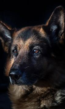 German Shepherd Wallpaper screenshot 5