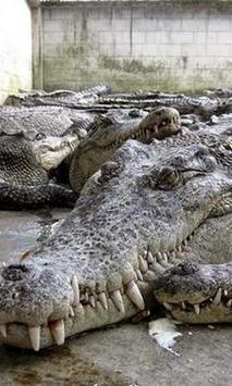 Crocodile Farmin Thailand poster