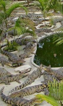 Crocodile Farmin Thailand apk screenshot