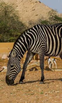 Al Ain Zoo Jigsaw Puzzles screenshot 1