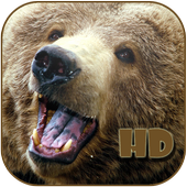 Bear wallpaper icon