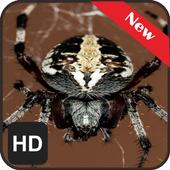 New Wallpaper Spider icon
