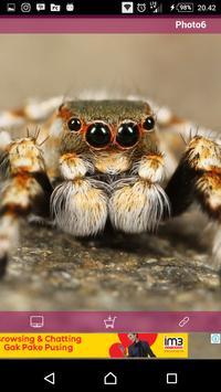 New Wallpaper Spider screenshot 2