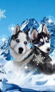 Husky Best Dogs poster