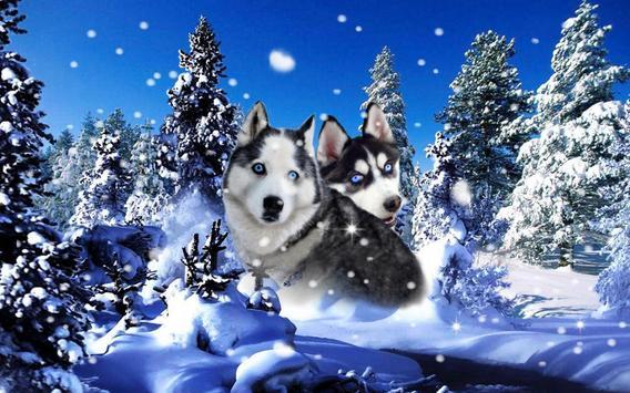 Husky Best Dogs screenshot 2