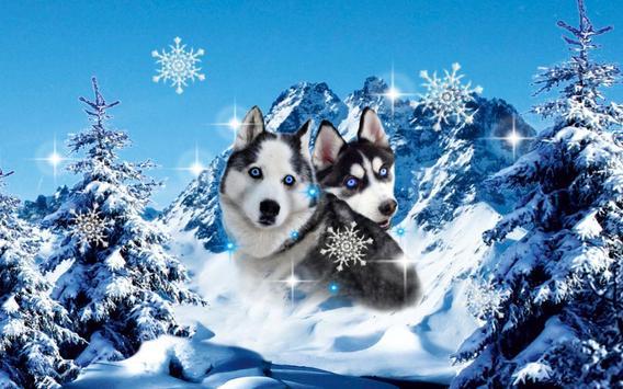 Husky Best Dogs screenshot 4