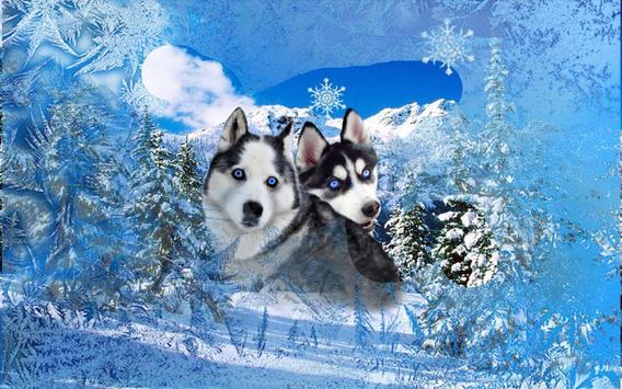 Husky Best Dogs screenshot 5