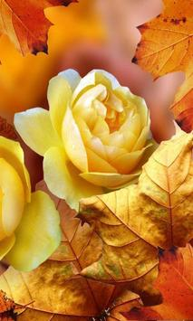 Roses Autumn live wallpaper poster