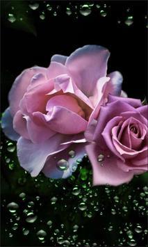 Roses Diamond Dew poster