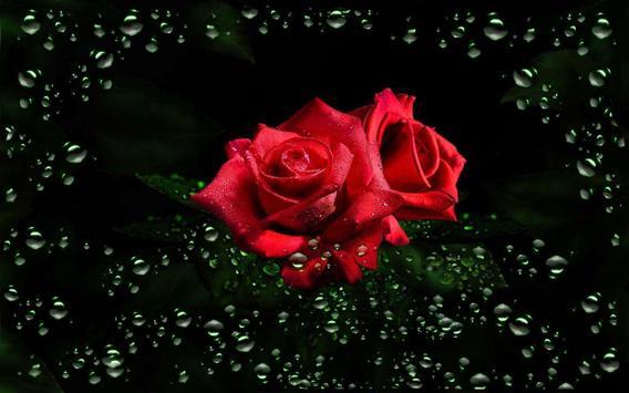 Roses Diamond Dew screenshot 5