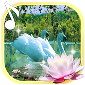 Swans and Lilies LWP icon