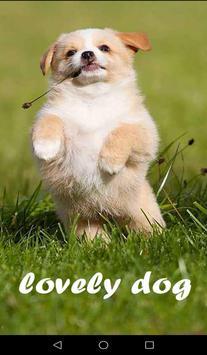 Lovely Dog WallPaper poster