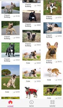 Lovely Dog WallPaper screenshot 2