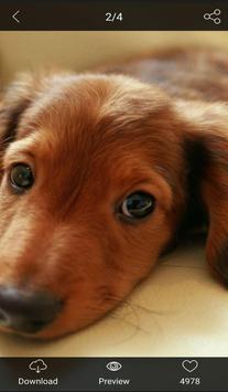 Lovely Dog WallPaper screenshot 3