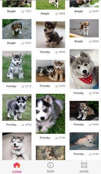 Lovely Dog WallPaper screenshot 4