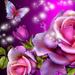 glitter rose wallpaper