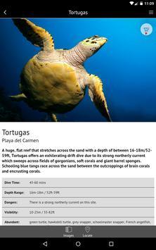 Mexico - Global Dive Guide screenshot 8