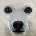 Ultimate Arctic Simulator