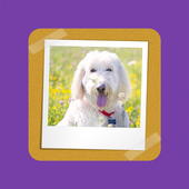Zendey Kids Flashcards Free icon