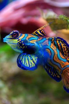 Ikan cantik wallpaper poster