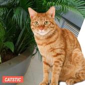 CATSTIC CAT STICKERS icon