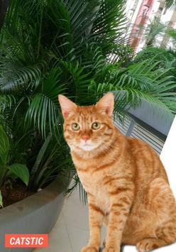 CATSTIC CAT STICKERS screenshot 1