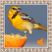 Oriole Birds Sounds icon