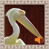 Pelican Birds Sounds icon