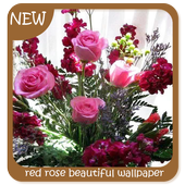 red rose beautiful wallpaper icon