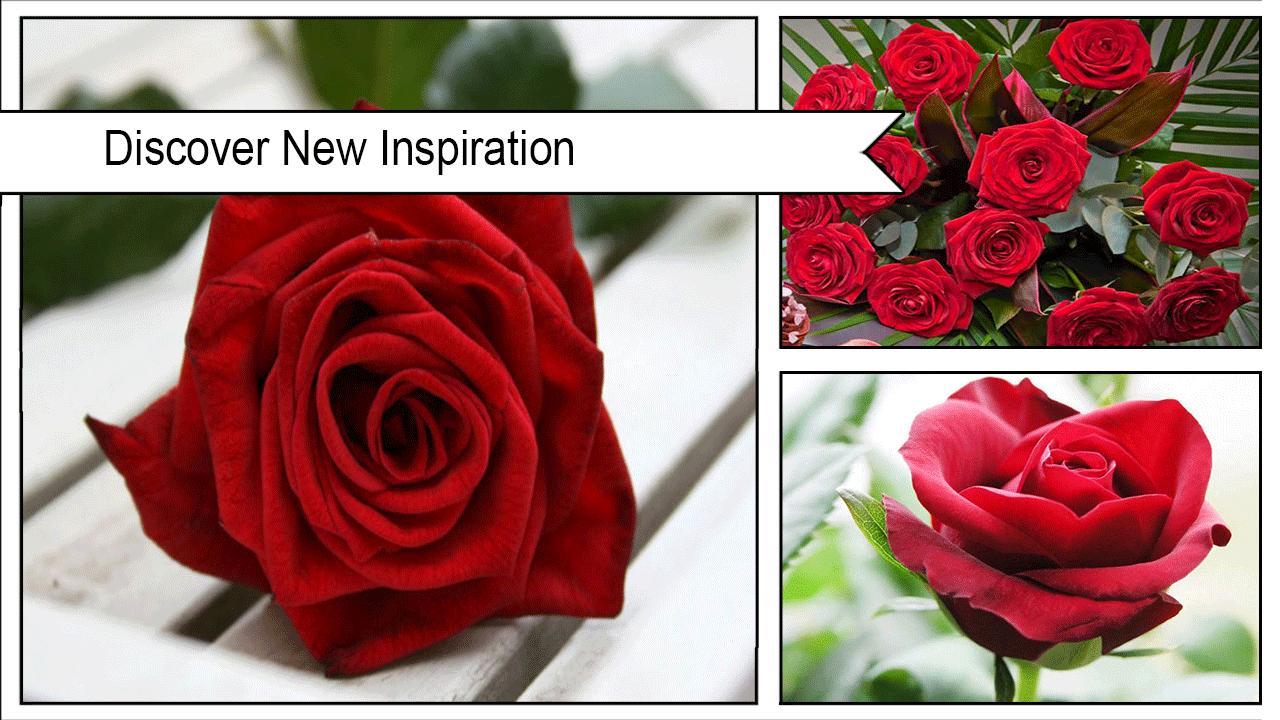 وردة حمراء خلفية جميلة For Android Apk Download