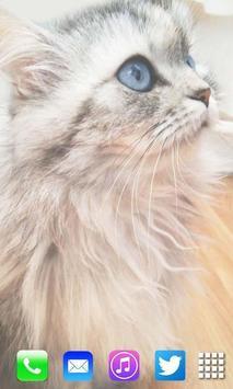 Cute Kitty Live Wallpaper screenshot 1