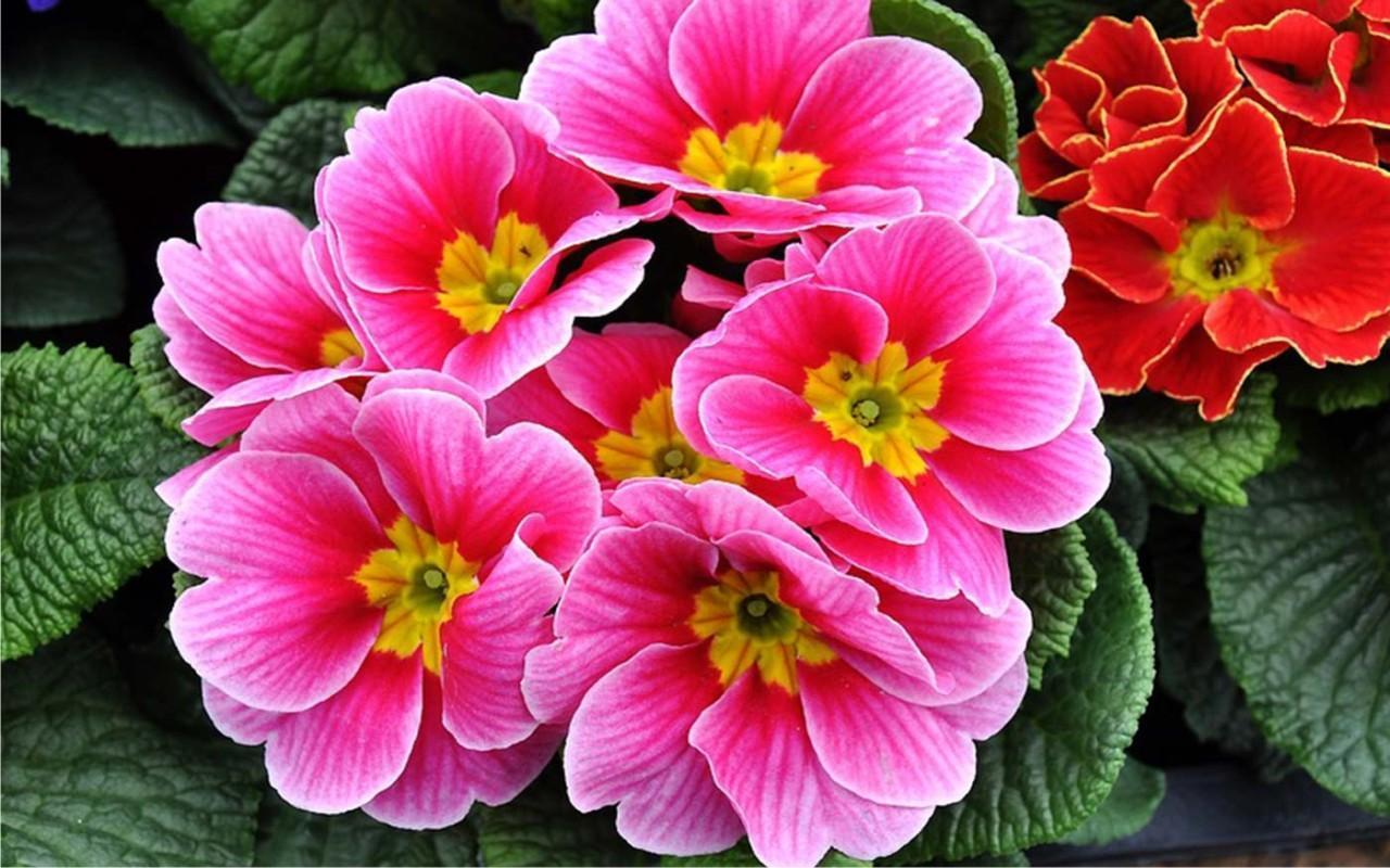 Flowers Spring Live Wallpaper Apk Download Free Personalization
