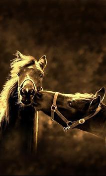 Horses Amazing 2017 LWP poster