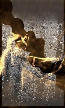 Horses Amazing 2017 LWP screenshot 2