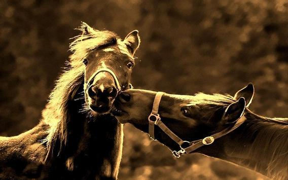 Horses Amazing 2017 LWP apk screenshot