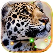Jaguars Tropical Forest LWP icon