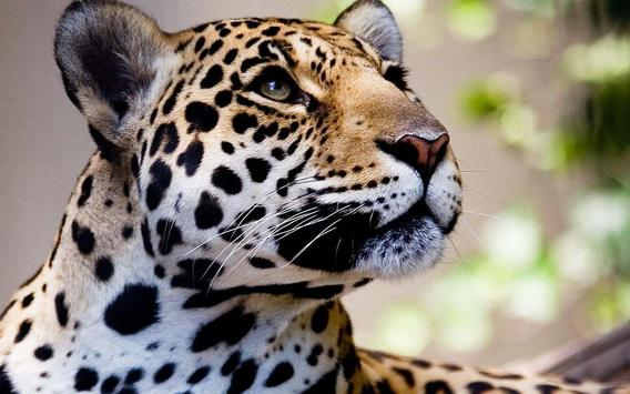 Jaguars Tropical Forest LWP screenshot 4