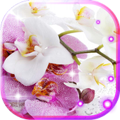 Orchide Glamour live wallpaper icon