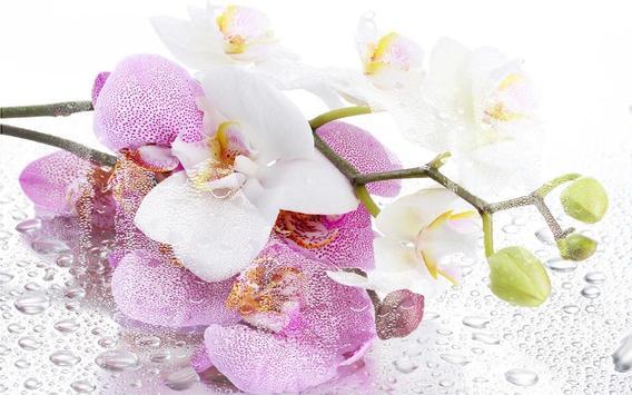 Orchide Glamour live wallpaper apk screenshot