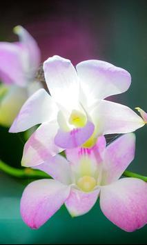 Orchide Glamour live wallpaper screenshot 4
