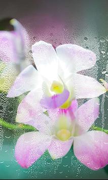 Orchide Glamour live wallpaper screenshot 5