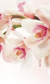 Orchide Glamour live wallpaper poster
