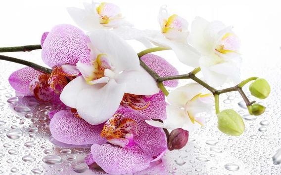 Orchide Glamour live wallpaper screenshot 11