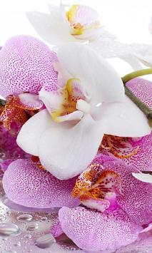 Orchide Glamour live wallpaper screenshot 1