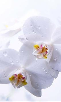 Orchide Glamour live wallpaper screenshot 2