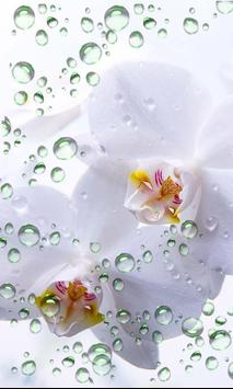Orchide Glamour live wallpaper screenshot 3