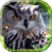 Owls HD live wallpaper icon