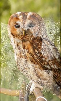 Owls HD live wallpaper screenshot 3
