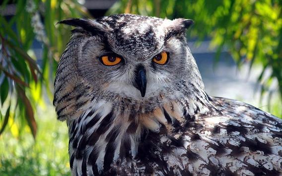 Owls HD live wallpaper screenshot 11